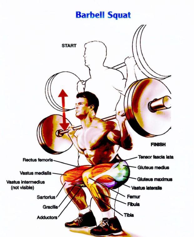squat-heat-map