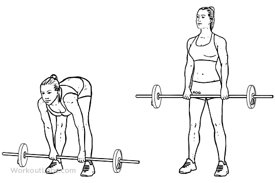 Stiff_Leg_Barbell_Deadlift1